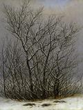 Bushes in the Snow Giclee Print by Caspar David Friedrich