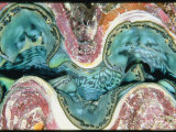 Close View of the Mantle of a Giant Clam Photographic Print by Wolcott Henry