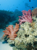 Close View of Soft Corals in a Reef Photographic Print by Wolcott Henry