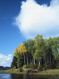Cloud Rises Above Birch Trees on the Shore of a Manitoba Lake Impressão fotográfica por Raymond Gehman