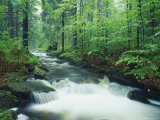 Fast Moving Stream Cuts Through a Beautiful Lush Forest Fotografisk trykk av Norbert Rosing