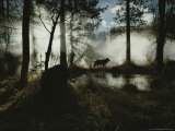 Gray Wolf, Canis Lupus, in Silhouette Passes By a Woodland Pond Fotografie-Druck von Jim And Jamie Dutcher