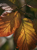 Close View of Dew on Autumn Foliage Photographic Print by Marc Moritsch