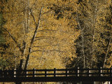 Golden Trees Surround a Footbridge Photographic Print by Marc Moritsch