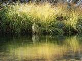 Sunbeams Light a Clump of Wild Grass Along the Water's Edge Fotografisk trykk av Marc Moritsch