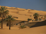 Caravan Travels Amongst the Dunes and Palm Trees of the Sahara Fotografisk tryk af Peter Carsten