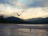 Sealers Cove, Wilsons Promontory National Park Reproduction photographique par Orien Harvey