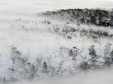 Mist Wreaths Alpine Eucalypt Forest in the Labyrinth, Du Cane Range in Winter Reproduction photographique par Grant Dixon