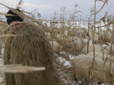 Shepherd Wrapped in Sheep's Fleece Tends to His Sheep, Transylvania Photographic Print by Gavin Quirke