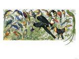 Quetzal, Toucans, and Other Tropical Birds Reproduction procédé giclée