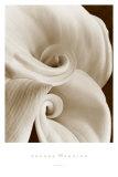 Fleur No. 1 Poster by Sondra Wampler