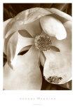 Fleur No. 3 Print by Sondra Wampler