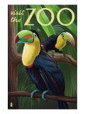 Visit the Zoo, Tucan Scene Plakat av  Lantern Press