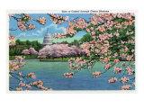 Washington DC, Vista of the Capitol through the Cherry Blossoms Posters van  Lantern Press