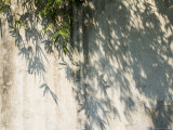 Bamboo in Traditional Chinese Garden, China Photographic Print by Keren Su
