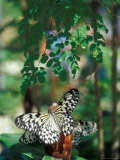 Butterfly Farm on St. Martin, Caribbean Fotografie-Druck von Robin Hill