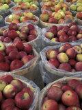 Macintosh Apples in Baskets, New York State, USA Lámina fotográfica por Adam Jones