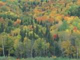 Northern Hardwood Forest in Fall, Maine, USA Impressão fotográfica por Jerry & Marcy Monkman