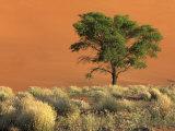 Sossusvlei Dunes, Namib National Park, Namibia Fotografie-Druck von Art Wolfe
