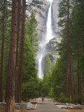 Upper and Lower Yosemite Falls. Yosemite National Park, CA Impressão fotográfica por Jamie & Judy Wild