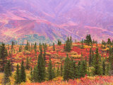 Fall Color in Denali National Park, Mt. Denali, Alaska, USA Photographic Print by Charles Sleicher