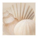 Shells III Kunstdrucke von Jan Lens