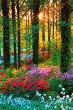 Blumen im Wald Poster