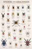 Spiders & Arachnids Posters