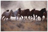 Grassland Herd Prints by David R. Stoecklein