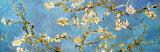 花咲くアーモンドの枝 1890年 ポスター : フィンセント・ファン・ゴッホ