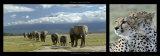 Elephants and Cheetah Arte por Michel & Christine Denis-Huot