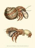 Hermit Crabs II Posters by Frederick P. Nodder