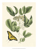 Butterfly and Botanical II Giclee Print by Mark Catesby