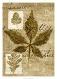 Leaf Collage III Giclée-tryk af Kate Archie