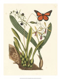 Butterfly and Botanical IV Giclée-Druck von Mark Catesby