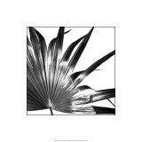 Black and White Palms I Premium Giclee-trykk av Jason Johnson