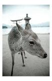 The Deer of Itsukushima Print by Takashi Kirita