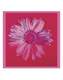 Daisy, c.1982  (crimson and pink) Poster di Andy Warhol