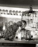 Child, Cat and Dove Affiche par Robert Doisneau