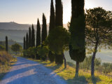 Country Road Towards Pienza, Val D' Orcia, Tuscany, Italy Fotografie-Druck von Doug Pearson