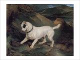 Portrait of a Terrier Giclée-tryk af Edwin Henry Landseer