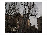 Sycamore, Aix-en-Provence, France Giclee Print by Nicolas Hugo