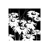 Black and White Daisy Poster by Franz Heigl