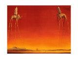 Les éléphants, 1948 Affiches par Salvador Dalí