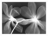 Magnolia I Reproduction giclée Premium par Hong Pham