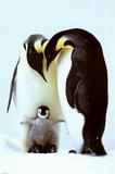 Penguin Family Prints