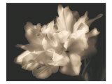 Double Dappled I Prints by Charles Britt