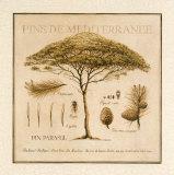 Pins de Mediterranee Julisteet tekijänä Pascal Cessou