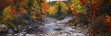Stream with Trees in a Forest in Autumn, Nova Scotia, Canada Fotografisk trykk