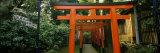 Torii Gates in a Park, Ueno Park, Taito, Tokyo Prefecture, Kanto Region, Japan Photographic Print